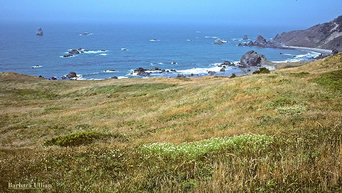 The Wild Rivers Coast of southwest Oregon and northwest California is one of this nation's most beautiful stretches of unspoiled coastline. Barbara Ullian photo
